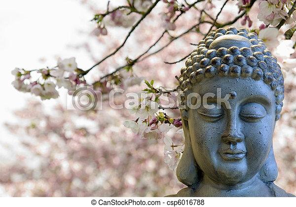 Zen Buddha Meditating Under Cherry Blossom Trees - csp6016788