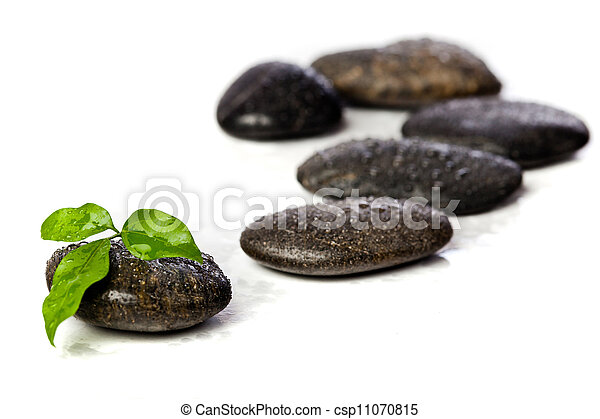 zen stones and freshplant with water drops - csp11070815