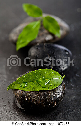zen stones and freshplant with water drops - csp11070465