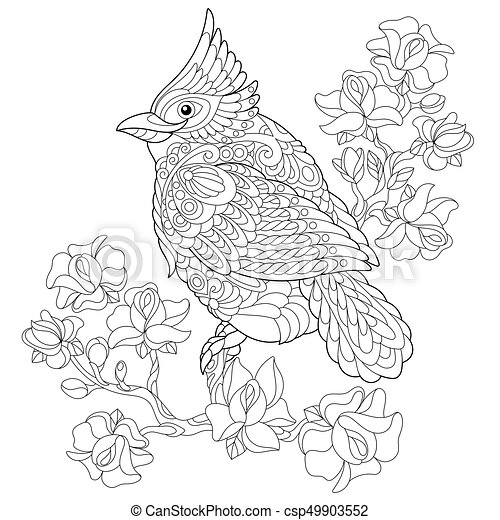 Zentangle Stylized Cardinal Bird Coloring Page Of