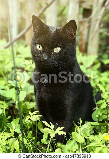 obrazy czarnych kotów