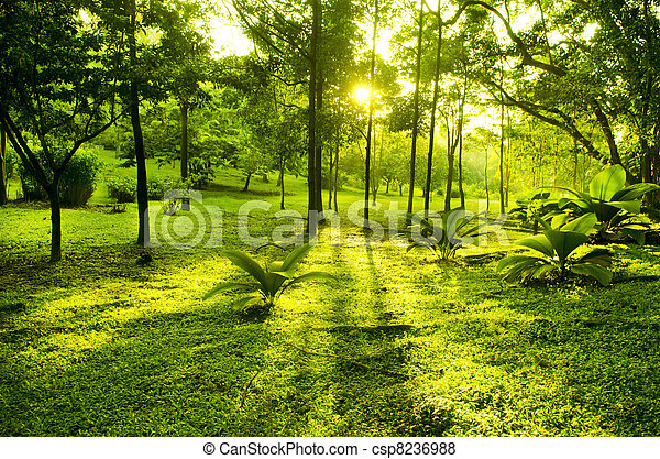 zielony park, drzewa - csp8236988