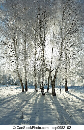 zima, las - csp0982102