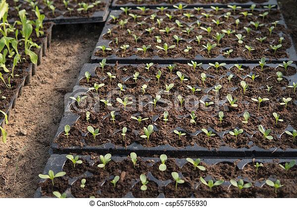 zinnia flower closeup - csp55755930
