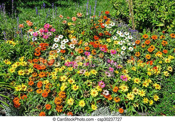 zinnia, parterre fleurs, jardin fleur