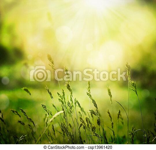 zomer, achtergrond - csp13961420