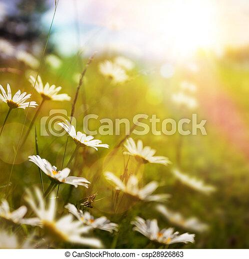 zomer, bloem, kunst, natuur, abstract, achtergrond, gras - csp28926863
