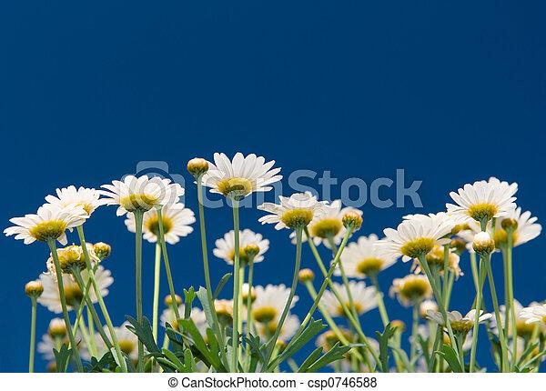 zomer, bloemen - csp0746588