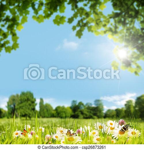 zomer, weide, natuurlijke schoonheid, achtergronden, dag - csp26873261
