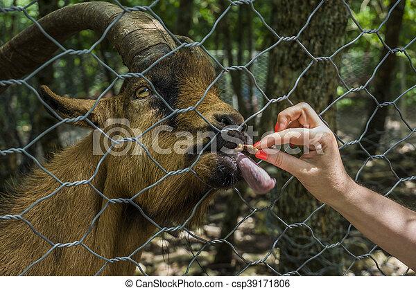 Zoo - csp39171806