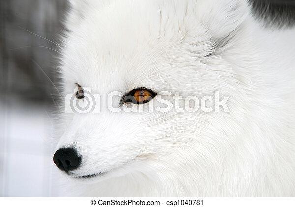 zorro ártico - csp1040781