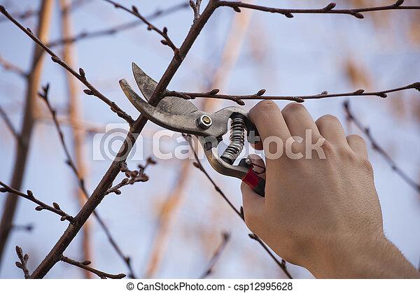 Obstbaum Schneiden zweige baum frucht schneiden fruehjahr beschneidung