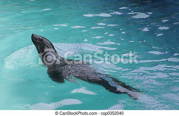 zwemmer - csp0352040