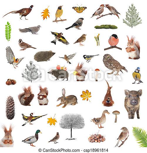 zwierzęta - csp18961814