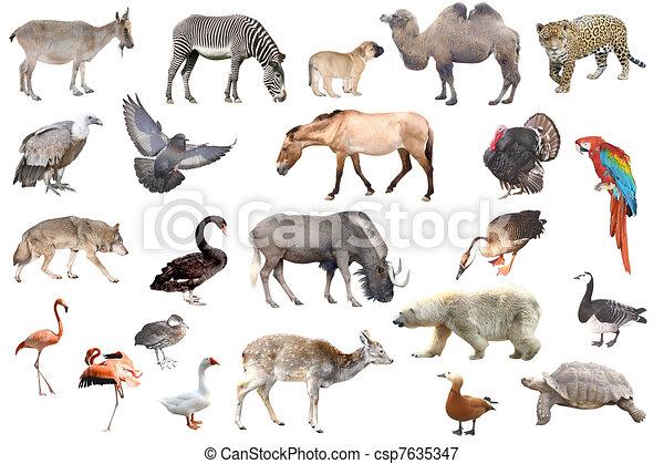 zwierzęta - csp7635347
