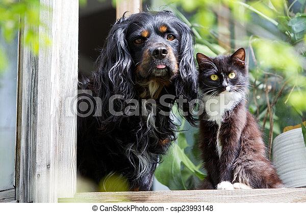 zwierzęta - csp23993148